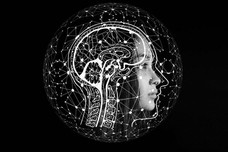 mózg, przekrój